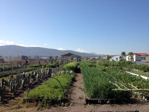 Bio-intensive Garden Beds