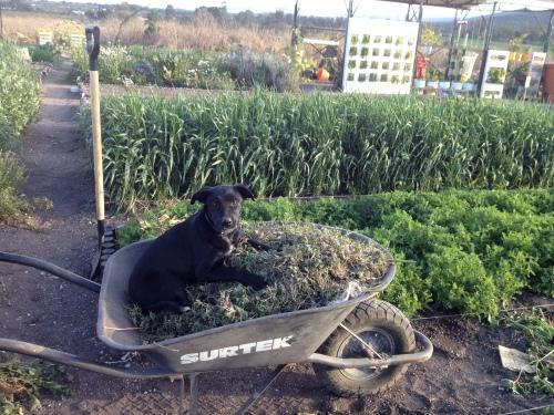 Pup at Work